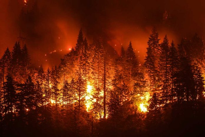 Dixie Wildfire Is Nearly Out but Its Devastation Remains